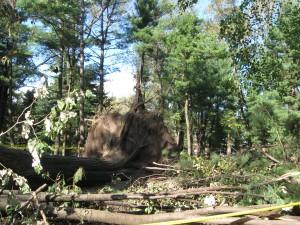alberi caduti in Central Park