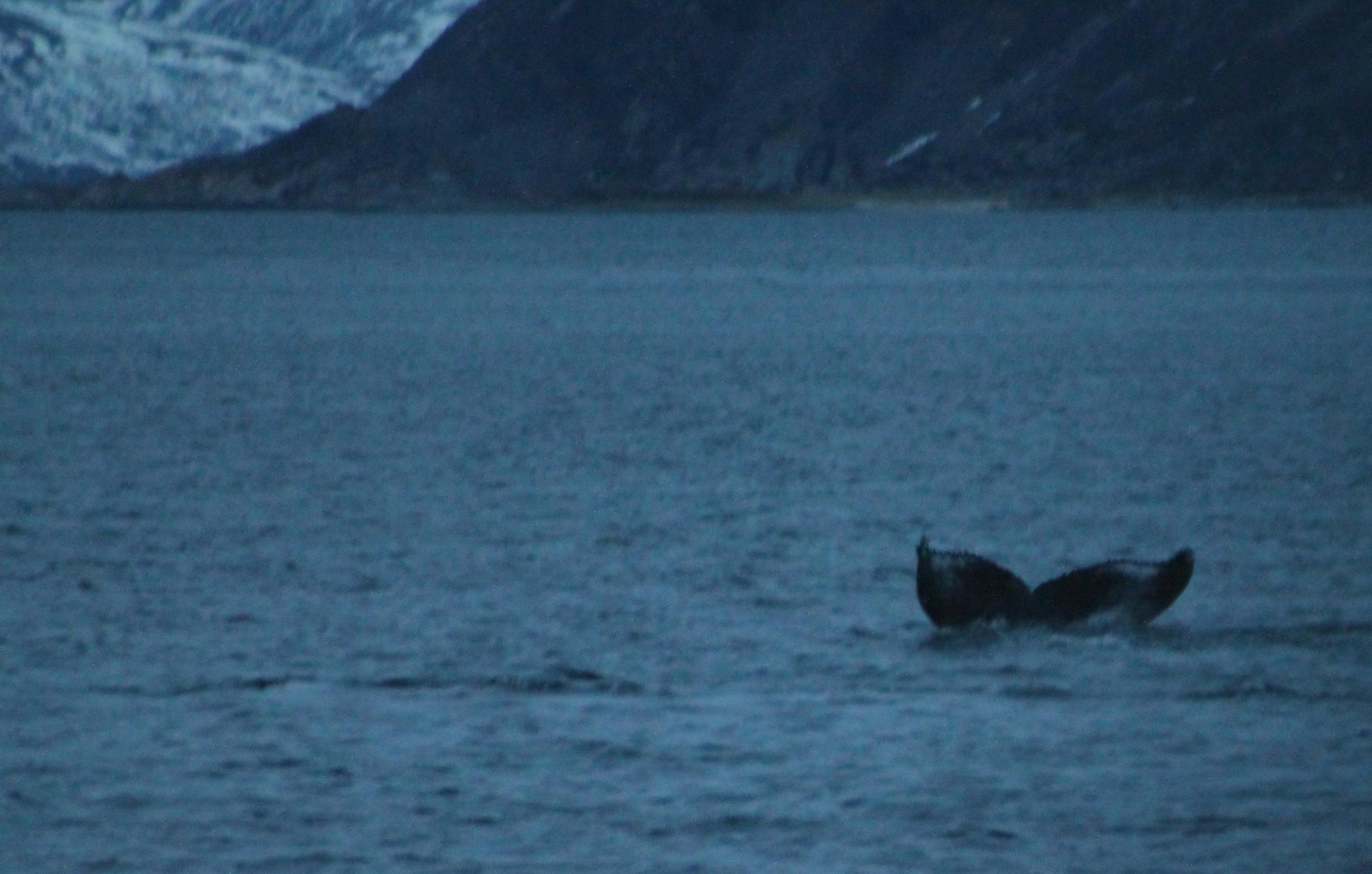 2014-01-03_11.38.24_Tromso_C071